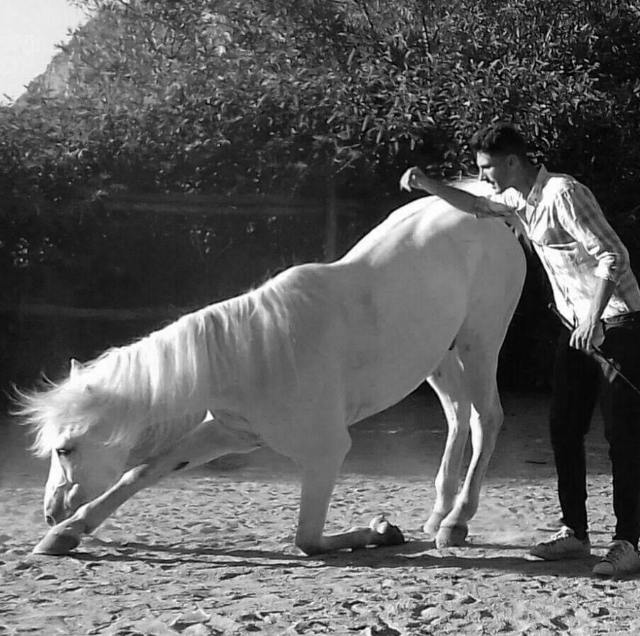 Piano di Sorrento: Francesco Esposito e i suoi magici cavalli attori!