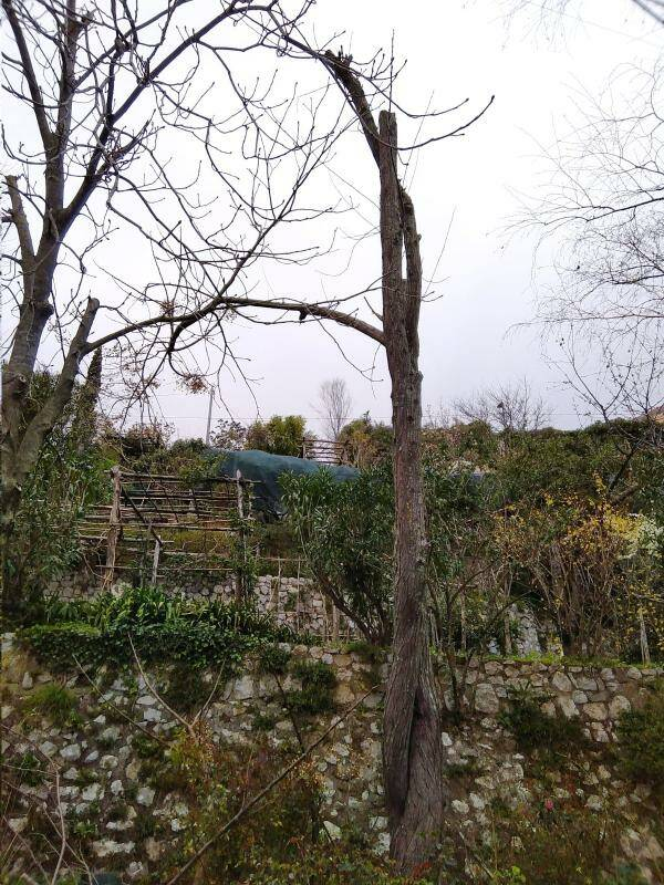 Tramonti, si rinnova lo scempio al Giardino Segreto dell'Anima