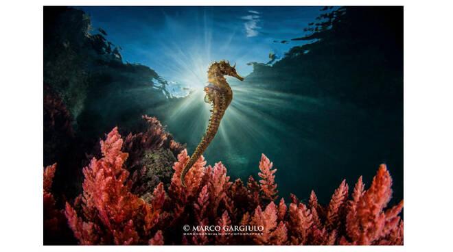 """All'Area Marina Protetta di Punta Campanella il premio """"Obiettivo Mare"""" con la foto di Marco Gargiulo"""