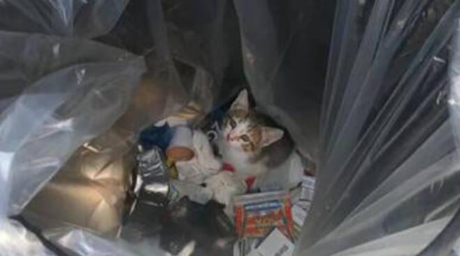 Pompei gattini gettati nel cesto dei rifiuti