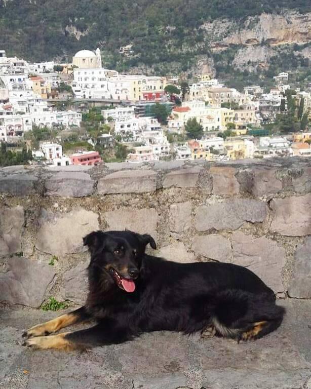 Lulù cane alla Garitta a Positano