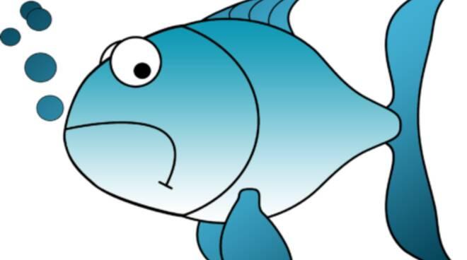 pesce d'aprile folgore massa