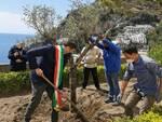 Positano, piantumato il primo albero di ulivo in ricordo delle vittime del covid