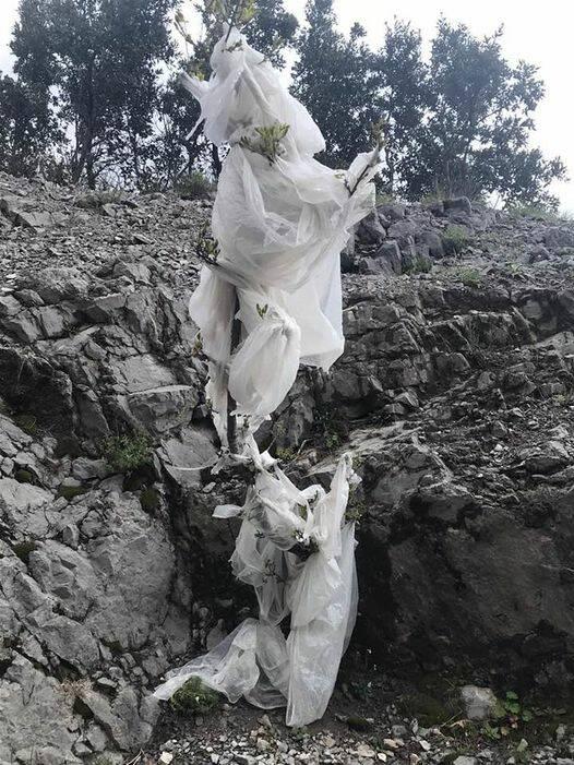 """Ravello, la riflessione di Secondo Amalfitano: """"C'è una lotta in corso fra la plastica e la Natura"""""""
