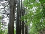WWF ed associazioni ambientaliste sulla proprietà e gestione del Monte Faito
