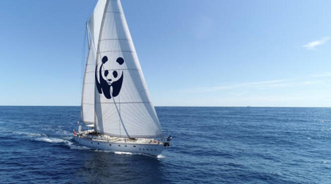 In barca a vela con il Panda alla scoperta dei cetacei del Mediterraneo
