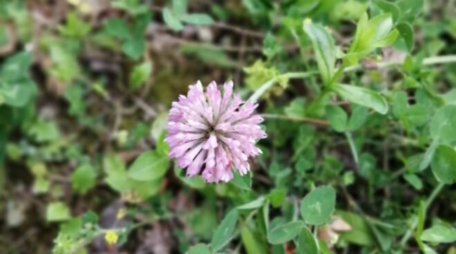 Su Monte Vico Alvano per il censimento di fiori e alberi