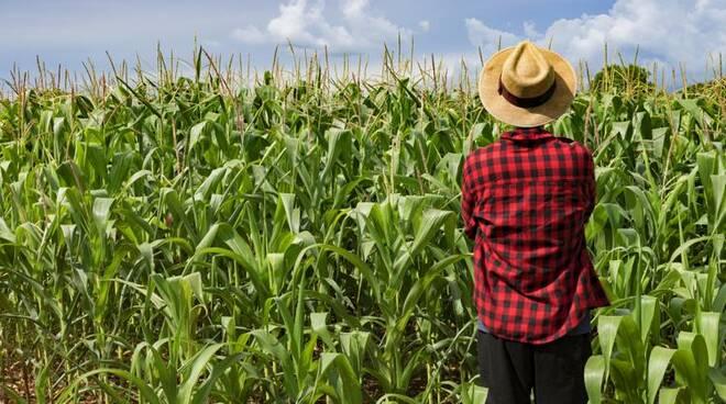 Contributi per l'imprenditoria giovanile in agricoltura. Di che si tratta e chi può beneficiarne