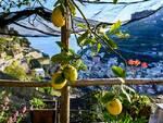 Limoni costa d' Amalfi foto Daria Malysheva