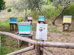 Massa Lubrense, alla Baia di Ieranto arrivano le api per produrre dell'ottimo miele
