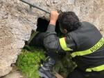 Ravello, gattino salvato dai Vigili del Fuoco, adottiamolo: qui i dettagli