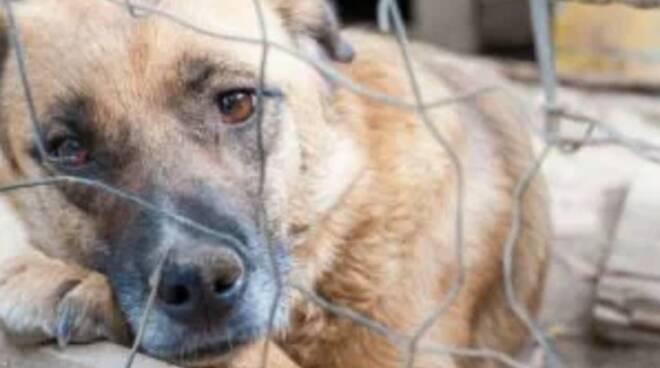 Ritrovato in provincia di Napoli un vero e proprio lager di cani