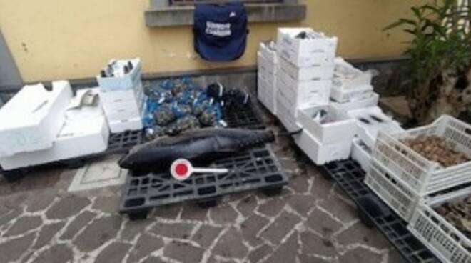 Sorrento: sequestrate 2 tonnellate di pesci e multe per 26mila euro ad un centro ittico