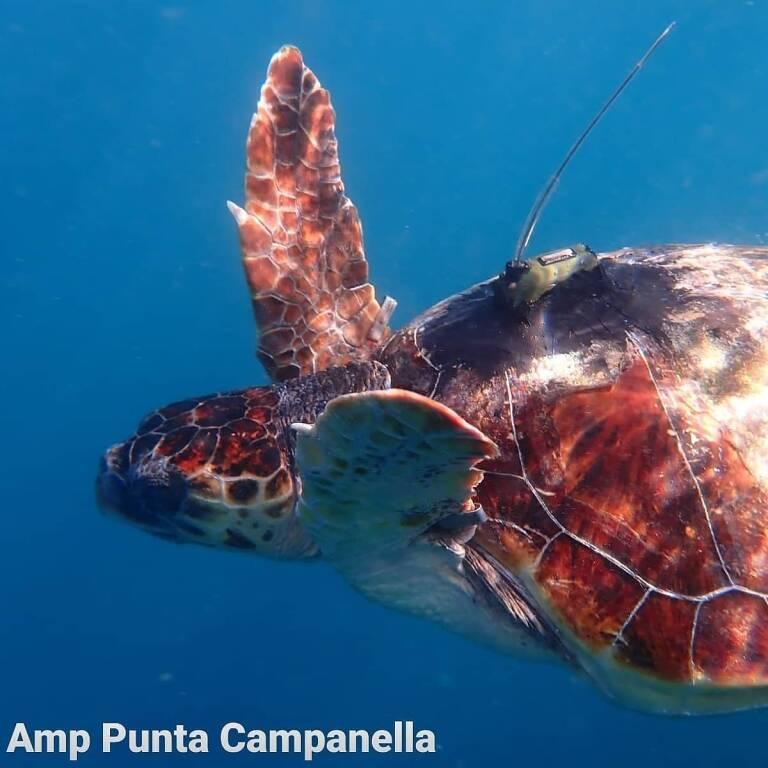 Un Centro soccorso tartarughe marine a Massa Lubrense