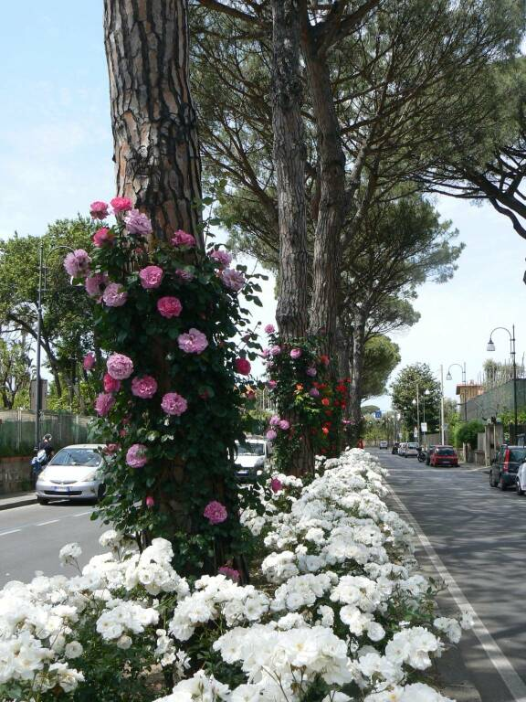 Viale dei Pini a Sant'Agnello