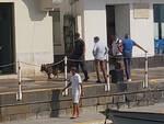 Capri, controlli della Guardia di Finanza con i cani antidroga