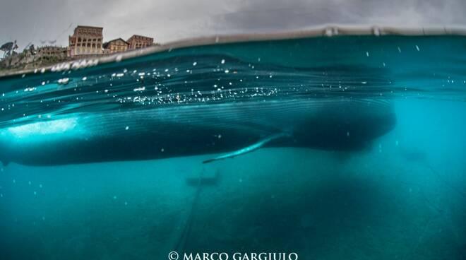 Sorrento - Alla scoperta delle balene intervista in esclusiva al biologo marino Dr. Valerio Manfrini