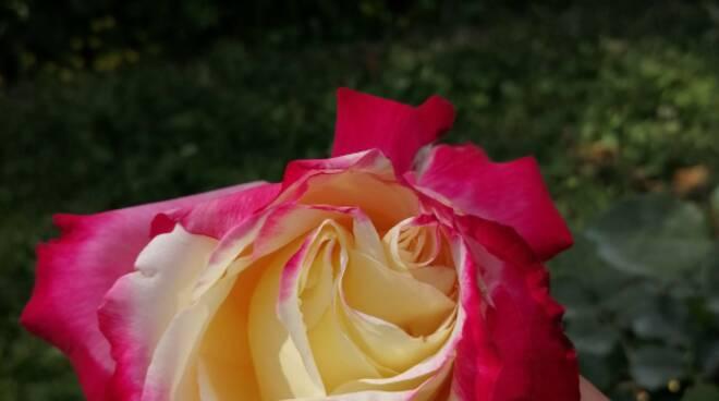 Risotto alle rose per la Giornata Mondiale dell\'Ambiente