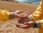 Ciro Moccia fabbrica della pasta grano