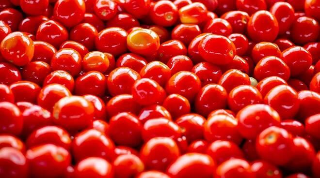 Codici: esposto in Procura a tutela dei consumatori sulle 821 tonnellate di pomodoro nocivo sequestrate nel salernitano