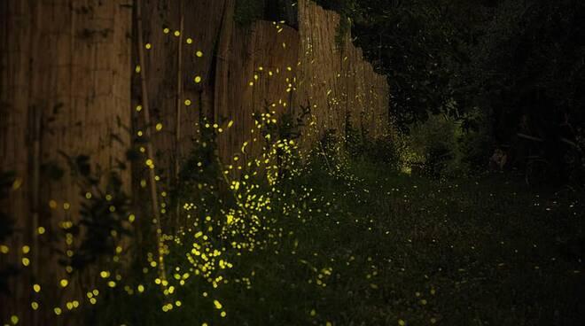 Sorrento: lo spettacolo del giardino invaso dalle lucciole