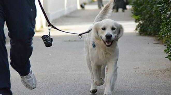 Sorrento, parte la campagna per il corretto comportamento dei proprietari di cani