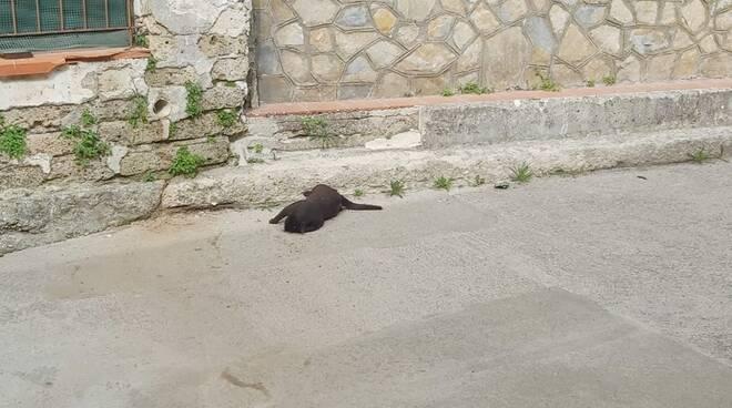 Tramonti, ancora gatti avvelenati. La segnalazione dell'ENPA Costa d'Amalfi