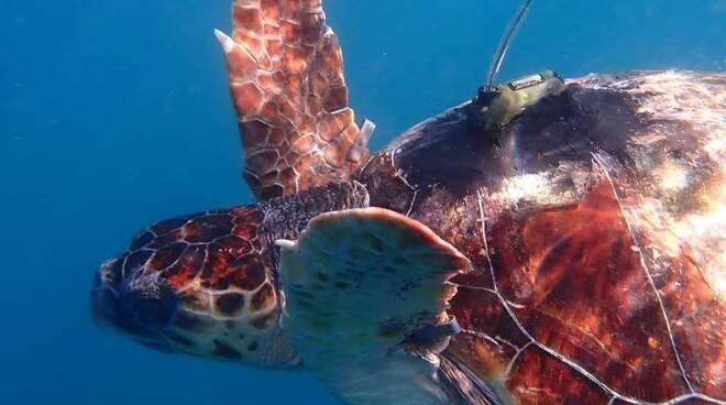 Un docufilm su tartarughe, inquinamento e golfo di Napoli: in uscita domani la pellicola del regista originario di Vico Equense, Iacopo Patierno