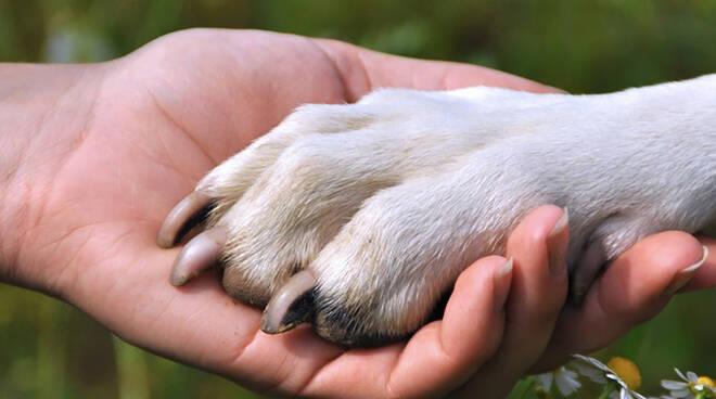 Atrani, ragazza in vacanza si affeziona ad un cane abbandonato e lo adotta