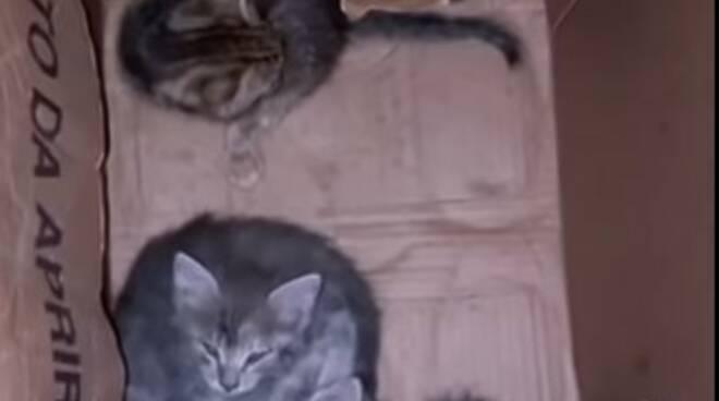 Gatti abbandonati in un cartone a Positano