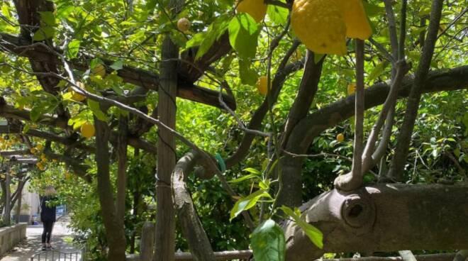 Giardini di Cataldo Sorrento