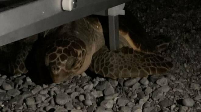 Maiori: divieto di accesso alla spiaggia dalle 19, obbligo di spostare i lettini e spegnere le luci per non spaventare la tartaruga