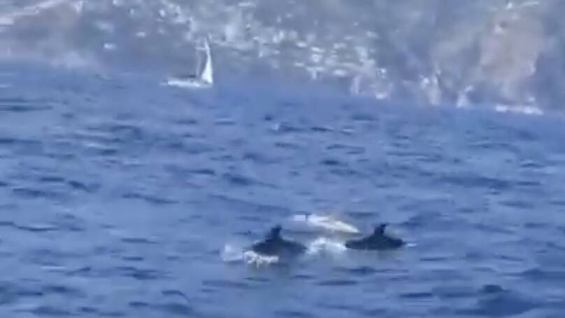 delfini costiera amalfitana
