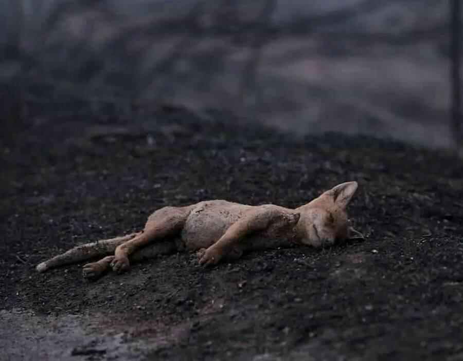 """L'appello delle associazioni ambientaliste alla Regione Campania: """"Tutela della fauna selvatica colpita dagli incendi"""""""