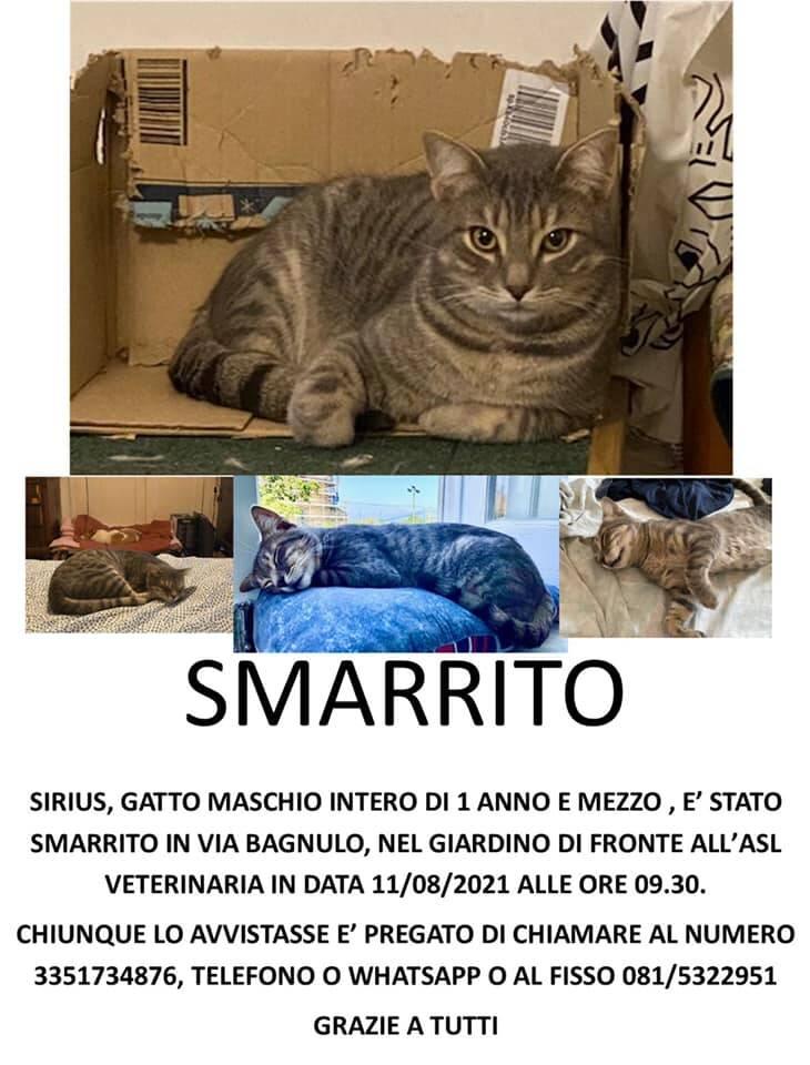 Piano di Sorrento, smarrito un gatto in Via Bagnulo. Un appello per ritrovarlo