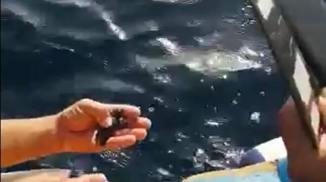 Nate altre 4 tartarughe nel nido non segnalato di Maiori