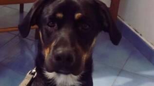 Praiano: purtroppo Ares è stato ritrovato senza vita