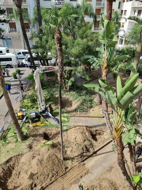 Sant'Agnello, lavori di riqualificazione dei giardini di Piazza Matteotti dopo i danni provocati dal punteruolo rosso