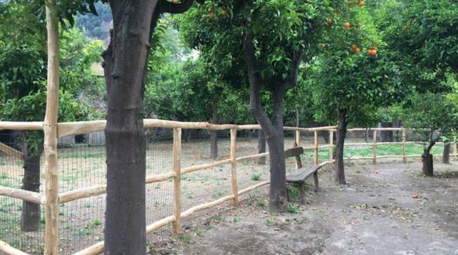 Sorrento, sabato 2 ottobre sarà inaugurata l'area di sgambatura per i cani presso Villa Fiorentino