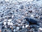 Schiuso anche a Salerno il nido delle tartarughe