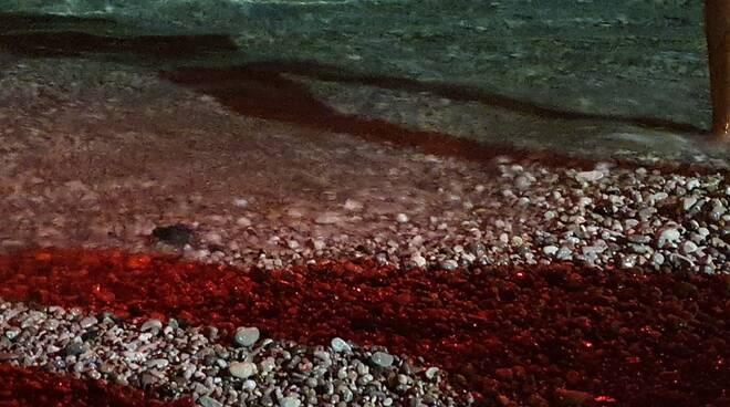 Tartarughe Maiori ENPA Costa d' Amalfi