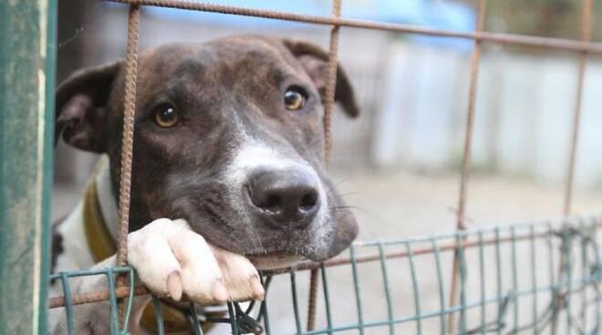 Pontecagnano, scoperto canile lager: denunciato il titolare, salvati diversi cuccioli